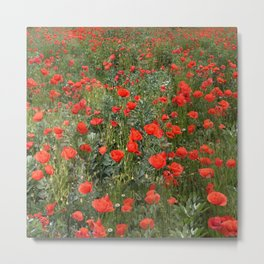 A stroll of poppies Metal Print