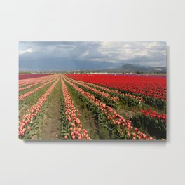 Tulip Fields with Mountain and Clouds Metal Print
