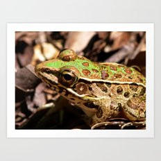 another frog Art Print