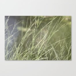 SummerBreeze Canvas Print
