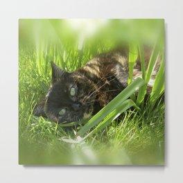 wild cat III Metal Print