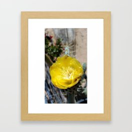 PRICKLY PEAR CACTUS FLOWER Framed Art Print