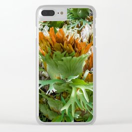 Mature Form of Staghorn Ferns Clear iPhone Case