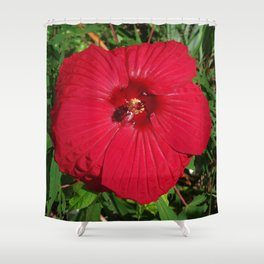Hibiscus 'Fireball' - regal red star of my late summer garden Shower Curtain