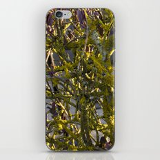 Moss in the Spring iPhone & iPod Skin