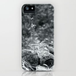 Great Grey Owl ii iPhone Case