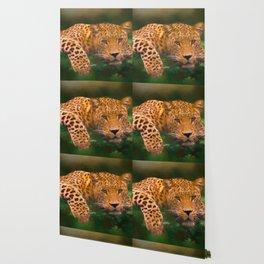 Here Kitty Wallpaper