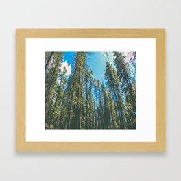Follow the Forest Framed Art Print