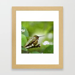 Hummingbird Sitting Framed Art Print