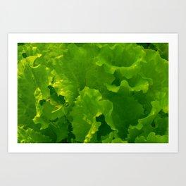 Fresh lettuce healthy eating Art Print
