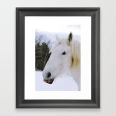 Lovely White Horse Framed Art Print