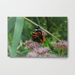 Admiral butterfly on a pink tree blossom Metal Print