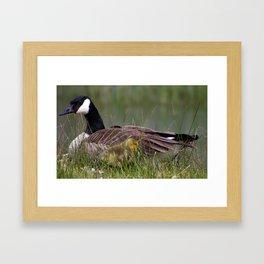 mother and gosling Framed Art Print