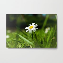 Daisy standing tall Metal Print