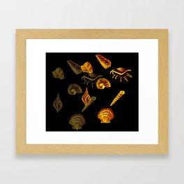 Blue Shells Framed Art Print
