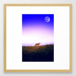 Lone Wolf, Tomales Point, Inverness, United States 2 Framed Art Print