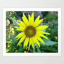 Stunning Sunflower Art Print