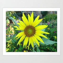 Stunning Sunflower Art Print