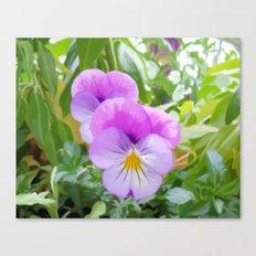 Violas Canvas Print