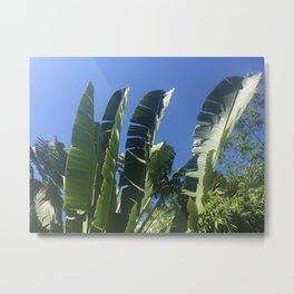Palms and Sky Metal Print