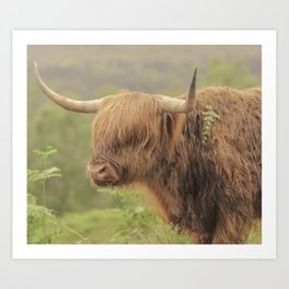 'Hamish' The Highland Cow Art Print
