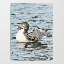 Baby loon all grown up Poster