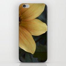 sunny bloom. iPhone & iPod Skin
