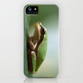 Mediterranean Tree Frog - Hyla meridionalis 8203 iPhone Case