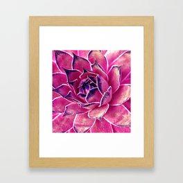 Suculenta Violeta Framed Art Print