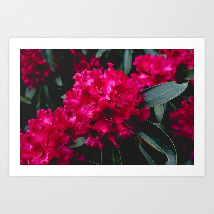 Vivid Floral Art Print