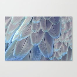 Silver Feathers Canvas Print
