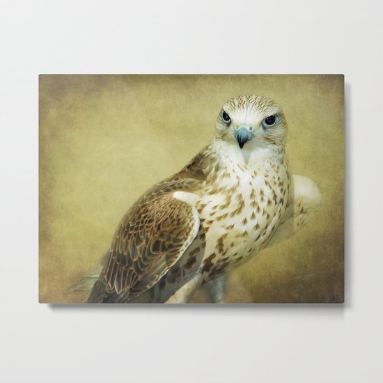 The Saker Falcon Stare Metal Print