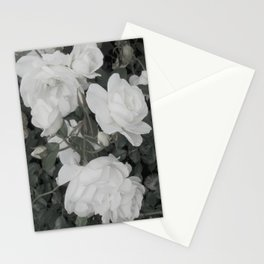 Pale Rose Stationery Cards