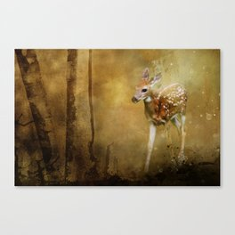 FAWN GOLDEN HOUR Canvas Print