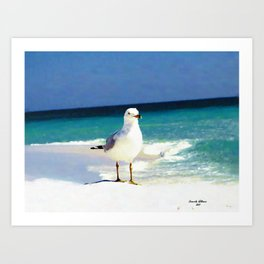 Emerald Coast Seagull  Art Print