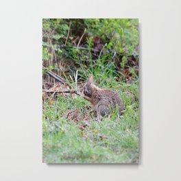 Bashful Rabbit Metal Print