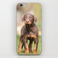 doberman iPhone & iPod Skins featuring doberman pinscher by Jana Behr