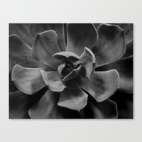 succulent Canvas Prints featuring succulent by Bonnie Jakobsen-Martin
