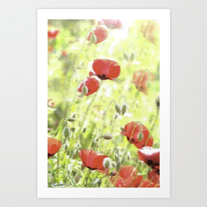 Poppies in the bright sunshine Art Print