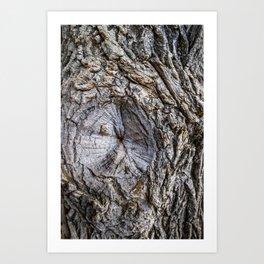 Owl's Eye Tree Texture Art Print