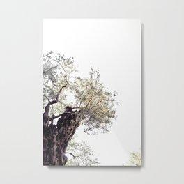 Garden of Gethsemane II Metal Print