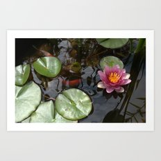 The Lily Pond Art Print
