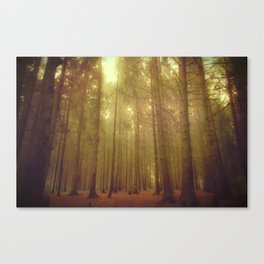 Our forest#2 Canvas Print