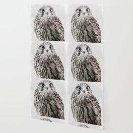 small hawk portrait Wallpaper