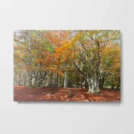 Wonderful and colorful autumn in the woods of Canfaito park, Italy Metal Print