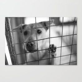 What About Me? Canvas Print