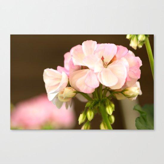 Soft Pink Petals Canvas Print