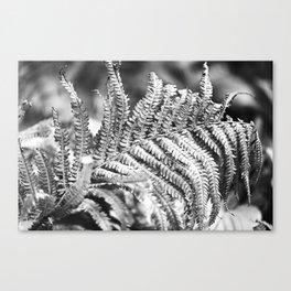 Fern 17 Canvas Print