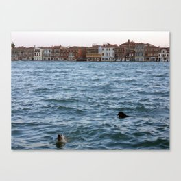 2 Dogs in the Water, Giudecca Canal, Venice, Italy Canvas Print