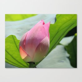 Lotus Bud in West Lake Canvas Print